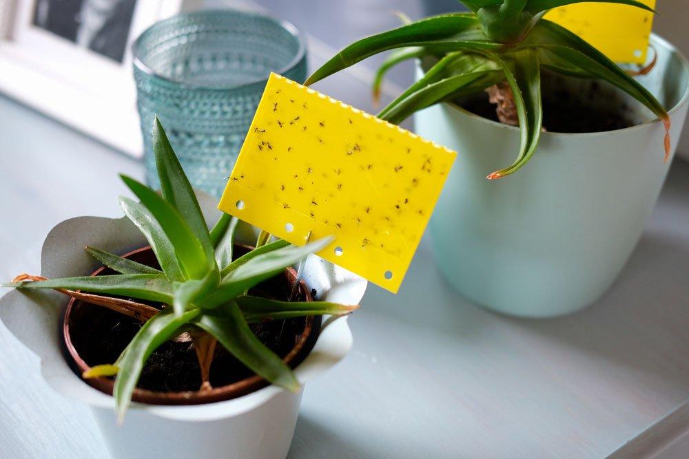 Schädlinge an Zimmerpflanzen – So werden sie bekämpft