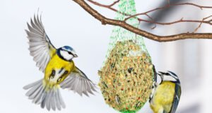 Vögel Meisenknödel