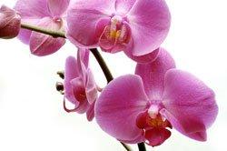 Die Wurzeln einer Orchidee brauchen viel Licht und Luft