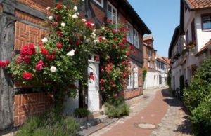 Kletterrose am Hauseingang - © ingwio - Fotolia.com