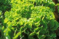 Versorgen Sie den Boden mit Kalzium