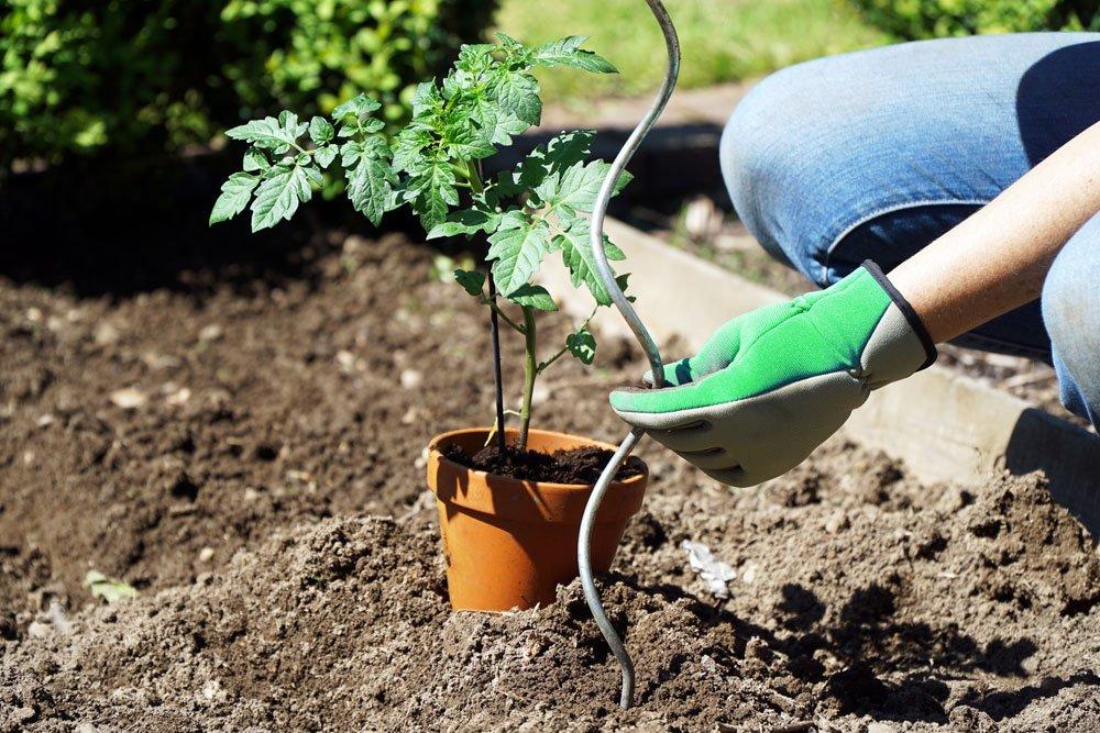 Rankhilfe Gemüse - Pflanzstab
