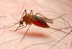 Stechmücken sind sehr lästig