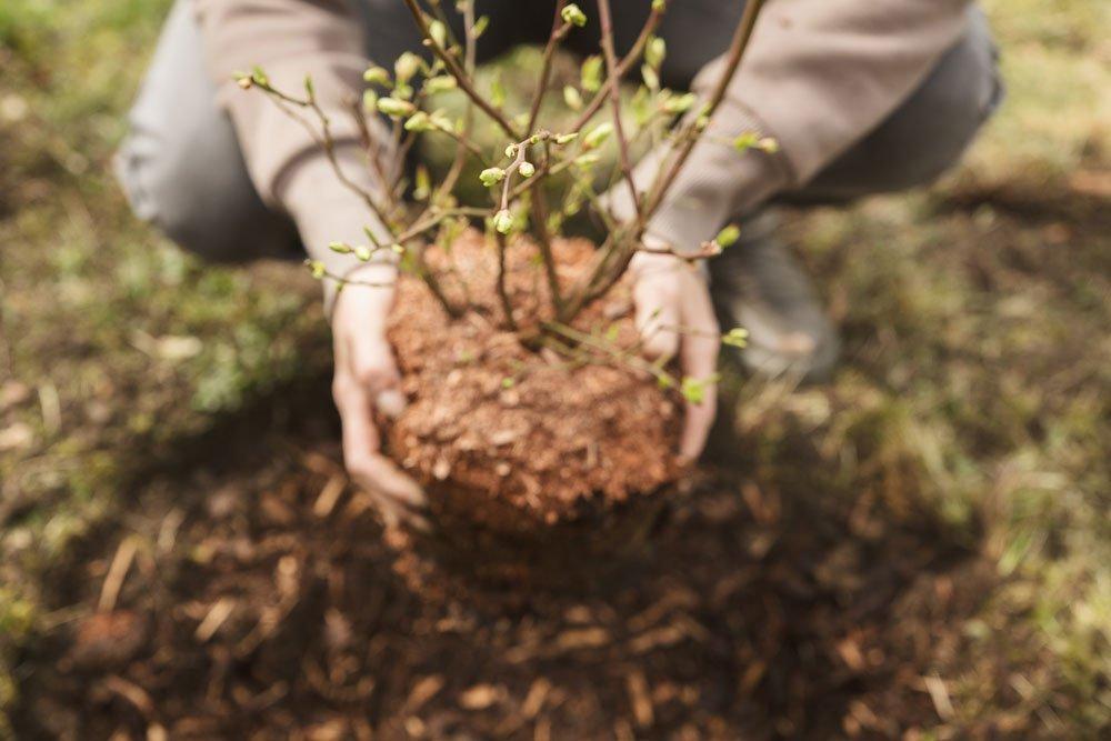 Gartenarbeit September - Pflanzen
