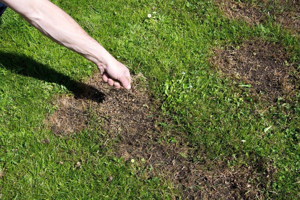 Gartenarbeit September - Rasen nachsäen