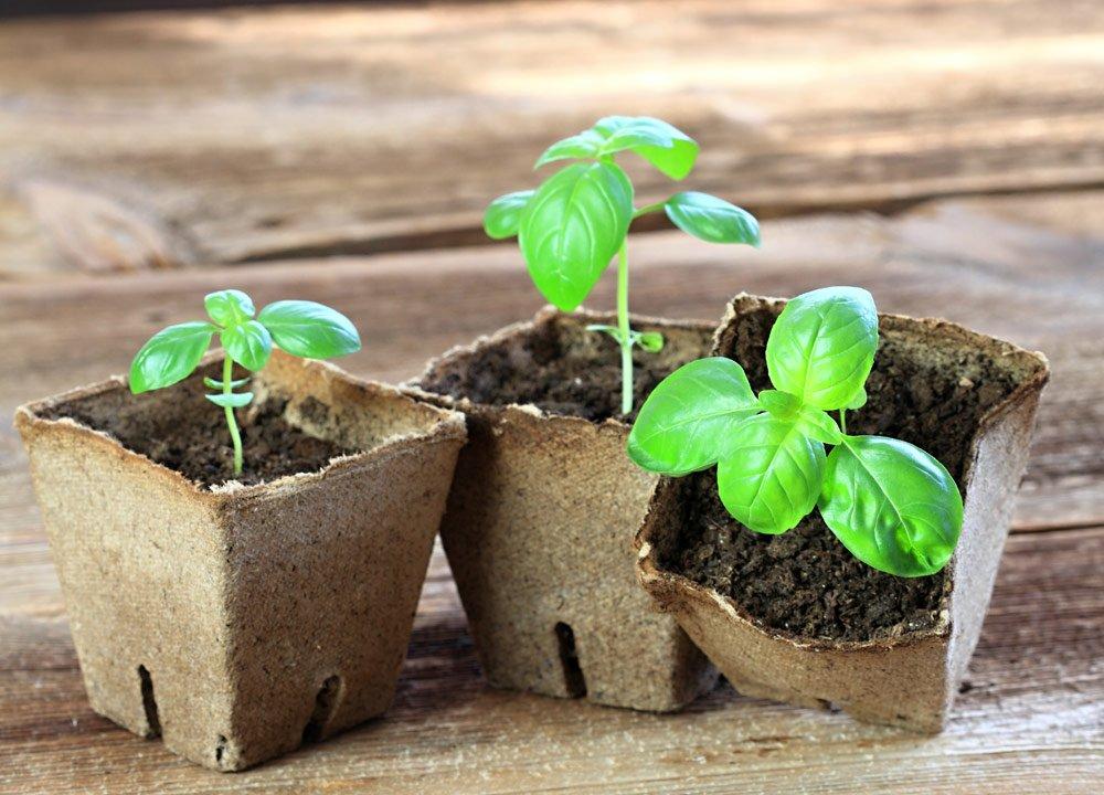 Kräuter einpflanzen