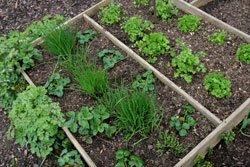 Kräutergarten anlegen – Schritt für Schritt Anleitung