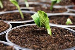 Welche Sorte möchten Sie pflanzen?