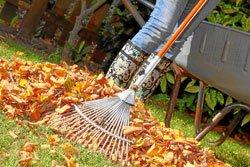 Sie können das Herbstlaub kompostieren