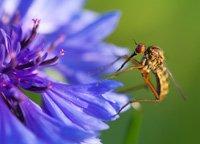 Insekten anlocken