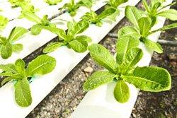 Gemüse vor Frost schützen