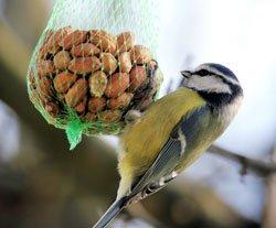 Füttern Sie die Vögel regelmäßig