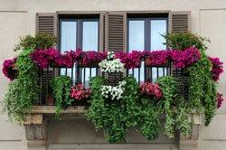 Auf einen Balkon gehören immer auch Blumen