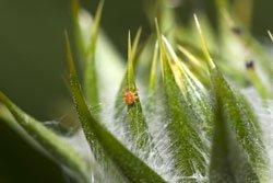 Spinnmilben lieben trockene Luft