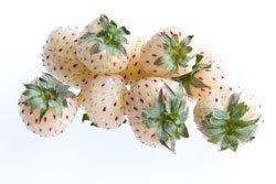 Weiße Ananas-Erdbeeren