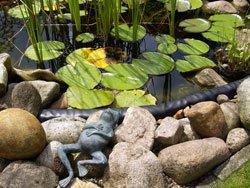Ein Teich sorgt für eine besondere Wohlfühlatmosphäre