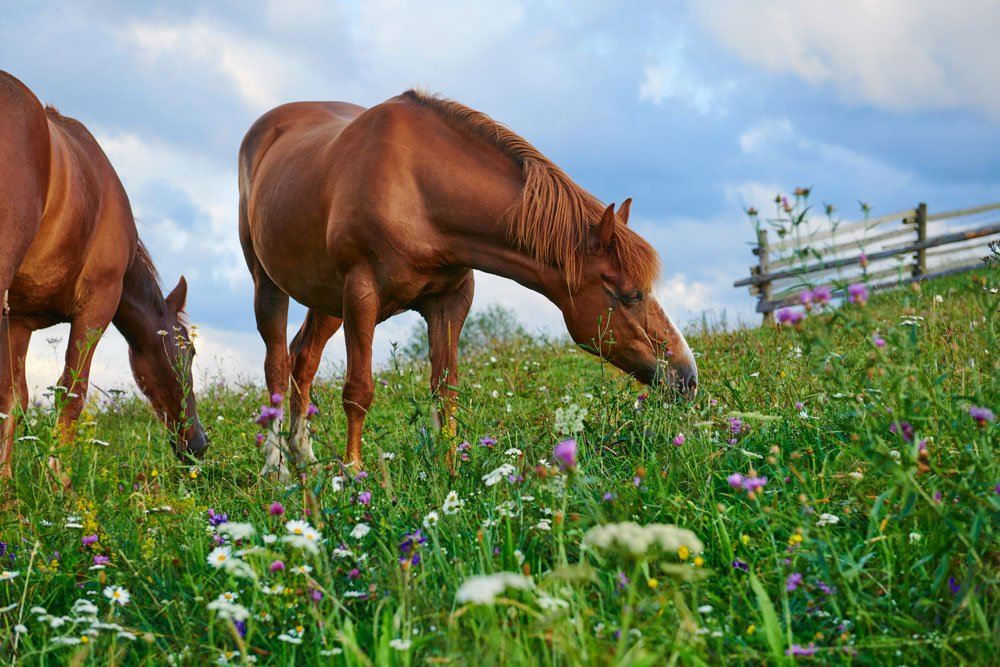 Pferdewiese anlegen