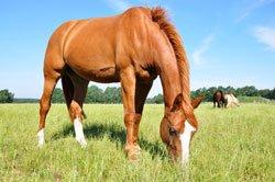Eine Pferdewiese muss mehreren Anforderungen gerecht werden