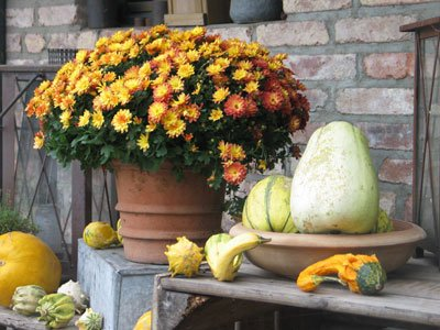 Chrysanthemen peppen jede Herbstdekoration auf