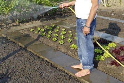 Feldsalat immer feucht halten