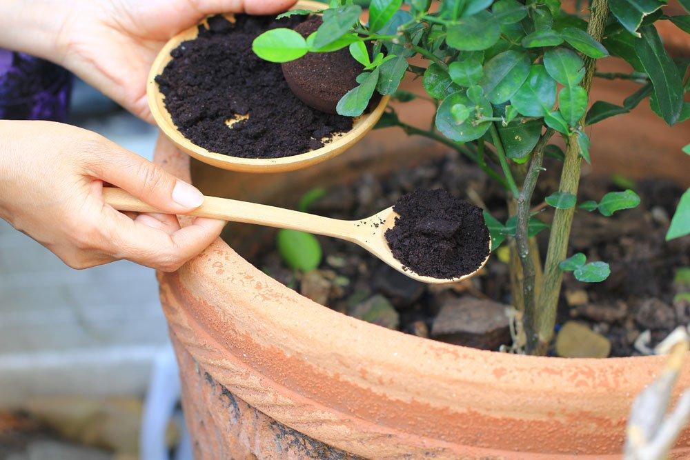 Kaffeesatz – Kostenloser Dünger für Freiland- und Topfpflanzen!