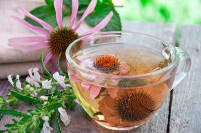 Den Roten Sonnenhut können Sie zu Tee weiterverarbeiten