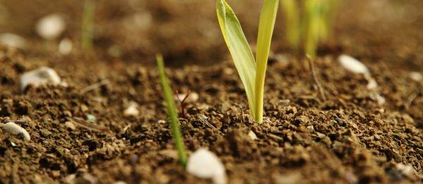 Funkien ? Winterharte Pflanzen Mit Dekorativer Blüte! Winterharte Balkonpflanzen Pflanzarten Und Pflege Tipps