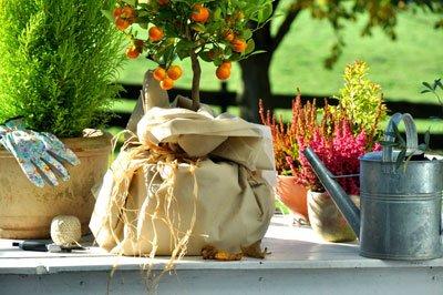Kübelpflanzen müssen Sie dick einpacken