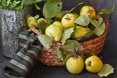 Quitten nicht zusammen mit Äpfeln und Birnen lagern