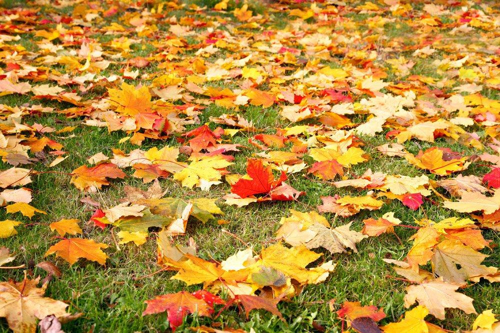 Rasen mit Herbstlaub