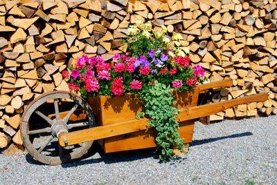 Winterharte Geranien können Sie auch in Kübel oder Ähnliches pflanzen