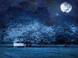 Gärtnern mit dem Mond? - Ja, das geht!