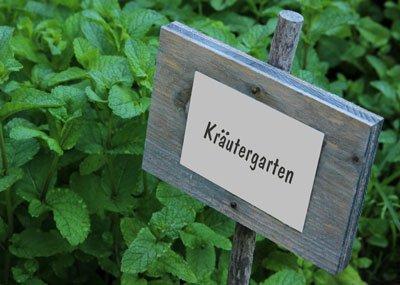 Sie können die Kräuter auch im Garten anpflanzen