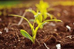 Pflanzen können auch ein guter Dünger sein