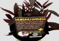 Aromatisch und gesund: Mukunu Wenna