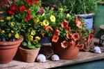 Pflanzen an die Sonne gewöhnen
