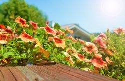 Auch Pflanzen können einen Sonnenbrand bekommen