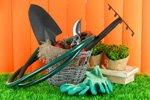 Gartenmelde Pflege