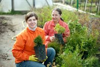 Thuja pflanzen