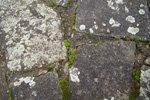 Pflastersteine mit Flecken