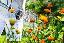 Leitungswasser ist für Freilandpflanzen oft zu hart