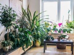 Zimmerpflanzen reinigen