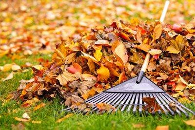 Strom sparen Garten Laub rechen