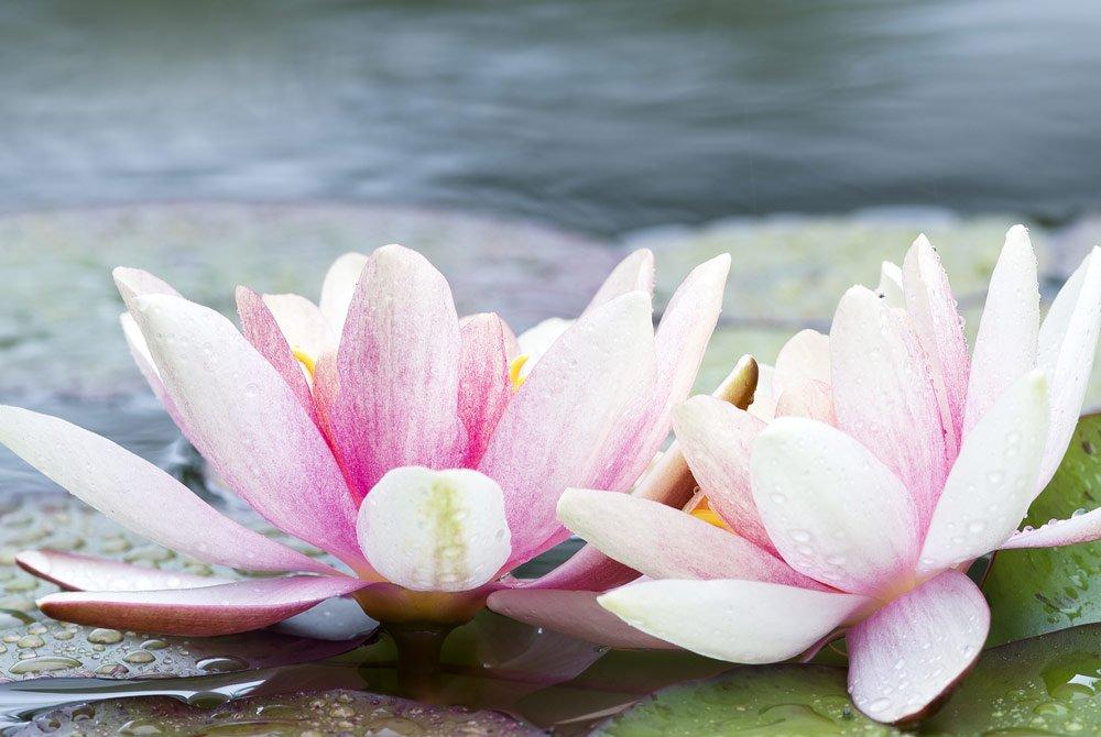 Schwimmteich Pflanzen