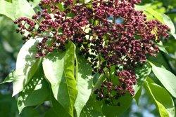 Bienenbäume tragen zum Schutz von Wespen, Bienen und Co. bei