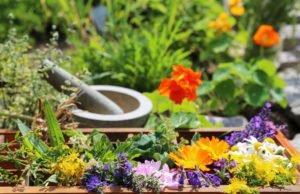 Heilkräuter pflanzen