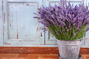Heilkräuter pflanzen Lavendel