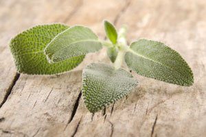 heilkr uter pflanzen sorten und deren wirkungen. Black Bedroom Furniture Sets. Home Design Ideas