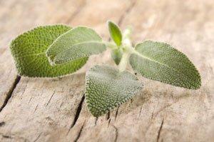 Heilkräuter pflanzen Salbei