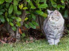 Katzen aus Garten vertreiben